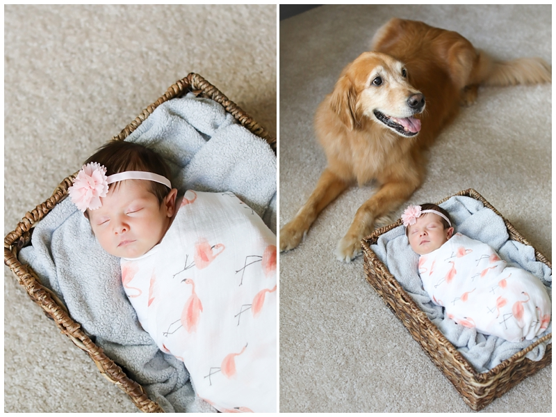 Tampa newborn with dog